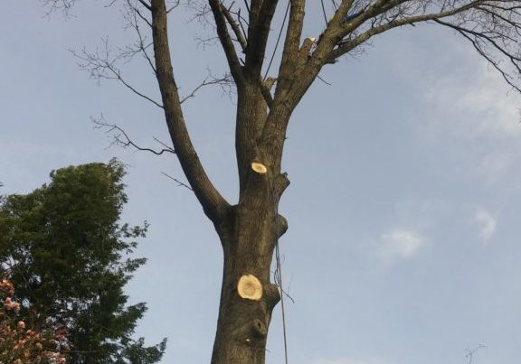 nj-tree-service