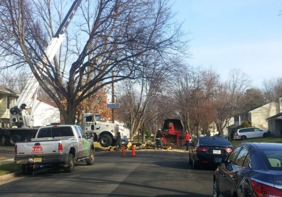 Tree-removal-nj