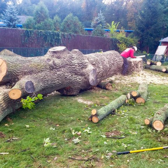 best-tree-service